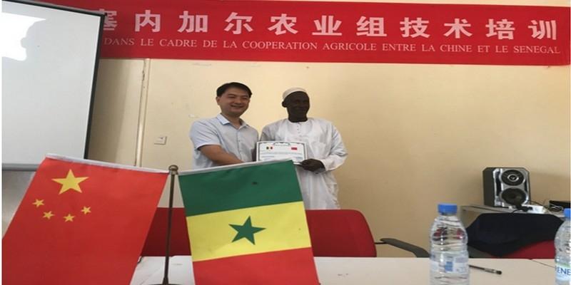 ILa 6e Mission agricole d'Assistance chinoise au Sénégal :La coopération agricole entre la Chine et le Sénégal est en train d'être boostée